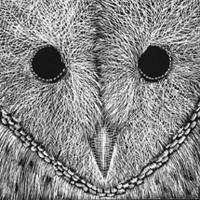 owl close-up